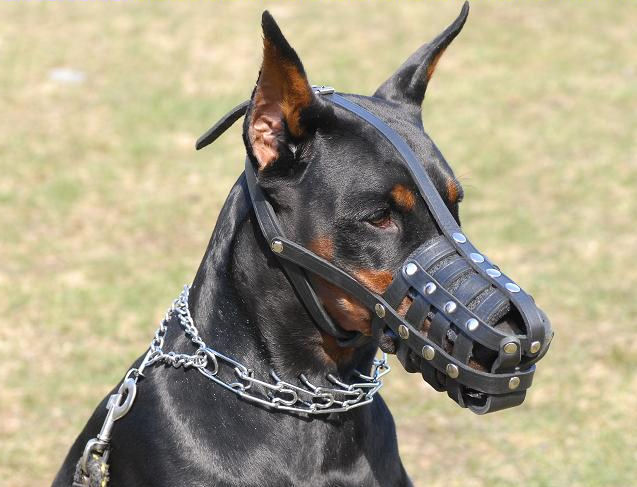 Dog Muzzle For Doberman