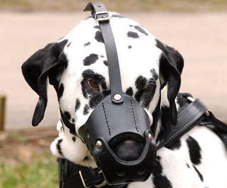sportdog bark collar instructions