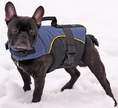 French Bulldog Harness with Handle | Dog Wear for French Bulldog