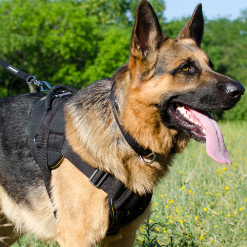 Best Dog Harness for German Shepherd Training and Walking