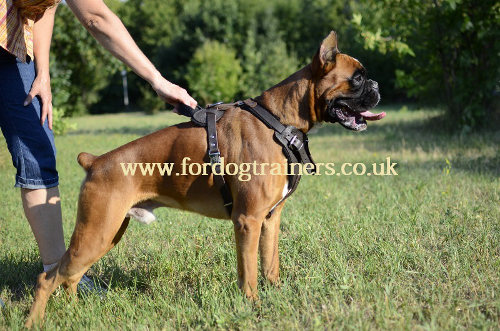 Boxer Dog Harness UK