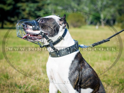 Pitbull Muzzles UK Bestsellers | Wire Dog Muzzle for Pitbull