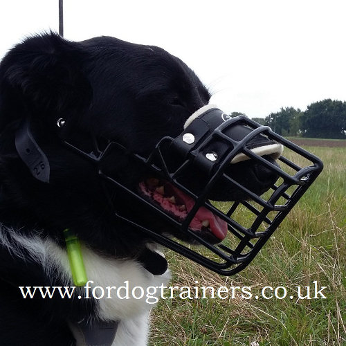 Collie Muzzle For Safe Walking