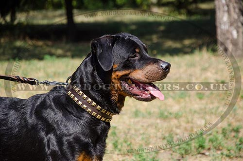 Leather Dog Collars for Large Dogs Style and Reliable Control