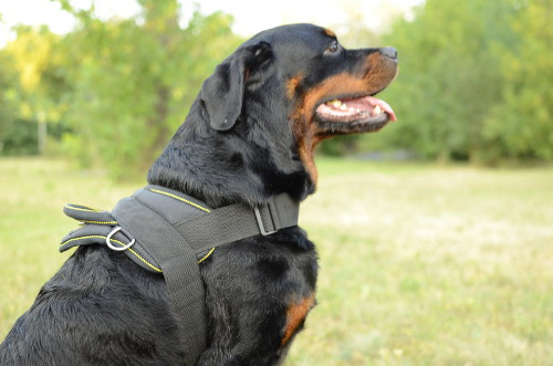 Rottweiler Harness for Multi-Purpose Use | Nylon Dog Harness UK