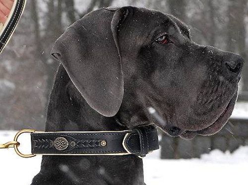 Royal leather dog collar for Great Dane