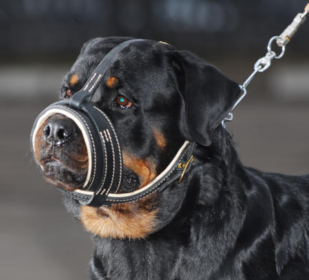 Best leather nappa dog muzzle in USA