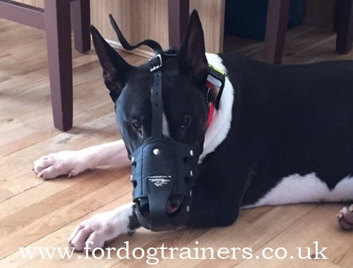 Buy the Best Muzzle for English Bull Terrier Long Snout Shape