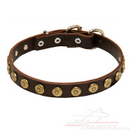 Leather Dog Collars for Small Dogs | Small Dog Collars UK