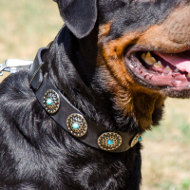 Leather Dog Collar for Rottweiler | Rottweiler Collars Fashion