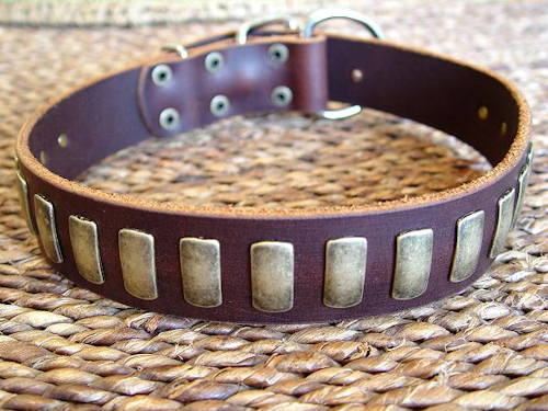 leather dog collar for Bullmastiff