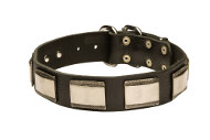 Leather Dog Collars with Nickel Plates | Designer Dog Collars UK