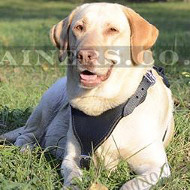 Leather Dog Harness for Labrador | New Soft Padded Dog Harness