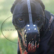 "Cane Corso Dog Muzzle with ""Flame"" Design"