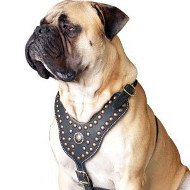 Leather Padded Dog Harness for Bullmastiff | Luxury Dog Harness