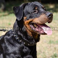 Strong and Stylish Rottweiler Dog Collars with Spikes