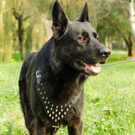 German Shepherd Dog Harness with Glossy Brave Spikes