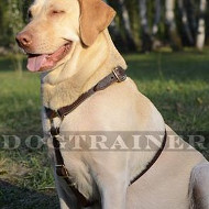 Luxury Leather Dog Harness for Labrador Walking