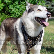 Luxury Dog Harness for Husky - Royal Style