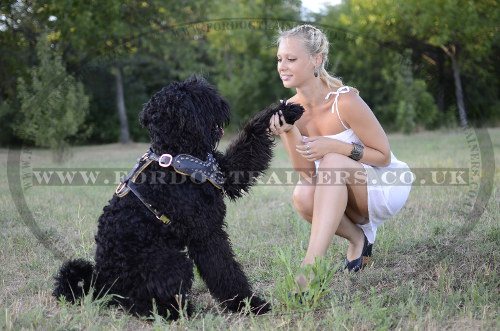 Luxury Leather Dog Harness on Black Russian Terrier