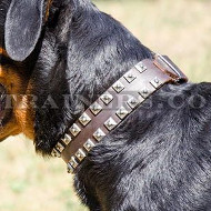 Rottweiler Luxury Leather Dog Collars Handmade by Professionals
