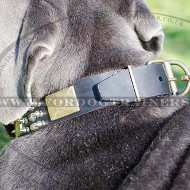 Mastiff Dog Collar for Sale | Mastino Napoletano Dog Collar