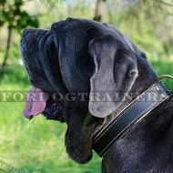 Mastiff Dog Collar UK | Padded Dog Collar for Italian Mastiff