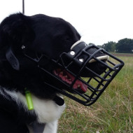 Collie Muzzle with Rubber-Coated Wire for Winter Use