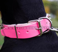 Limited Edition of Exclusive Doberman Collars