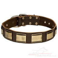 New Dog Collar Gorgeous Leather and Brass