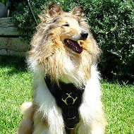 New Dog Harness for Collie UK | Dog Leather Harness Bestseller