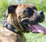 Boxer Dog Collars Handmade By Professionals, with Silver Medals