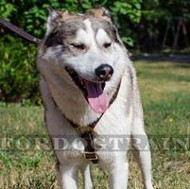 Luxury Dog Harness for Husky Dogs | West Siberian Laika Harness