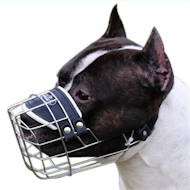 Wire Basket Dog Muzzle for Amstaff, that Allows Drinking