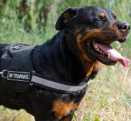 Reflective Dog Harness for Rottweiler Service Dogs, with Patches