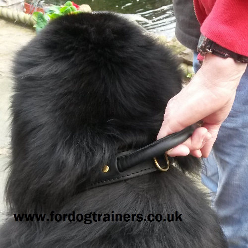 Buy Newfoundland Collars UK