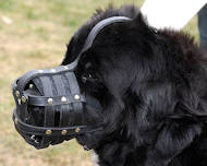 Everyday Light Muzzle for Dog UK for Newfoundland