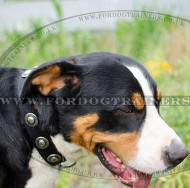 Swiss Mountain Dog Collars UK | Nylon Dog Collar Vintage Style