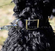 Nylon Dog Collar for Strong Dog Reliable Control