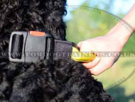 Collar with Handle for Dogs | Black Russian Terrier Collars