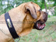 Personalized Dog Collar with ID Tag | Cane Corso Mastiff Collar