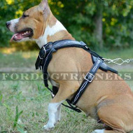 "Designer Dog Harness ""Barbed Wire"" for Pit Bulls for Sale"