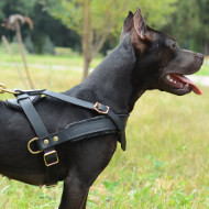 Pitbull Harness Perfect for Dog Sport, Tracking and Pulling!