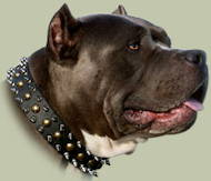 Spiked and Studded Leather Dog Collar UK for Pitbull