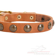 Puppy Dog Collar | Small Dog Collar with Brass Round Studs