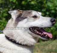 Quality Leather Dog Collar for Alaskan Husky Style and Comfort