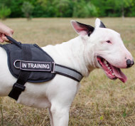 Reflective Dog Harness for English Bull Terrier with Handle