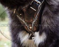 Exclusive Leather Dog Training Harness for Caucasian Shepherd