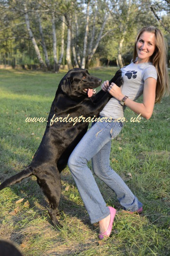 adult dog rehoming and training