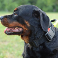 Rottweiler Collars with Handle | Nylon Dog Collar with Handle